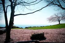 Pretty-landscape