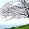 Quick-tree-background