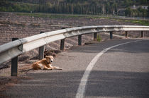 Wild Dog Laying in Road by Michael Bastianelli