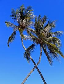 Thailand-palmen