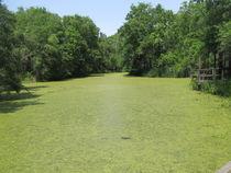Mossy Pond by sherrys-camera