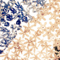 Plastic Flowers by Sergio Miranda