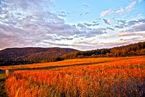 Red field in the highlands von michal gabriel