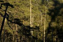 Deep old forest von Nicklas Wijkmark