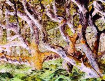 Der Zauberwald by Eckhard Röder