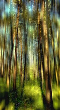 Im Zauberwald by Matthias Rehme