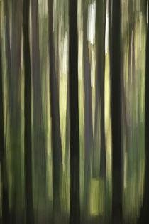 Waldrausch X by Hartmut Fittkau
