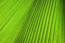 Palm Leaf von Jonne Seijdel