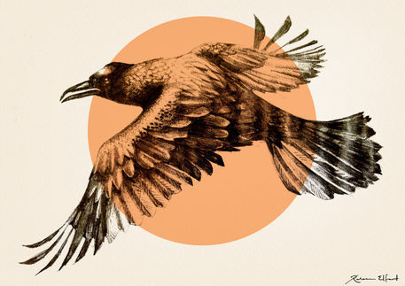 Orange-raven