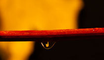 Autumn in a Raindrop by Steven Stoddart