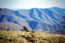Roane-mountain-1