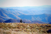 Roan Mountain 2 von Melanie Mayne