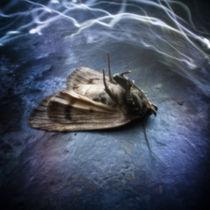 Moth von Justin Lundquist