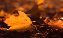 Fallen leaves von Jana Behr