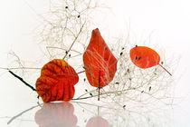 Autumnal zen by Martine Affre Eisenlohr