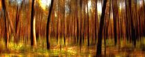Waldblick von Matthias Rehme