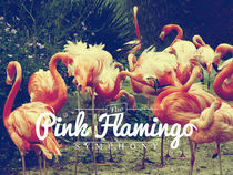 The Pink Flamingo Symphony von Julien LAGARDÈRE