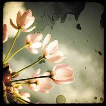 Romance Rose by Marc Loret