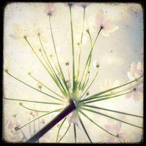 Fleurs Délicates by Marc Loret