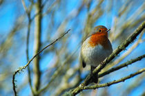 Winter Robin by Jamie Hunter