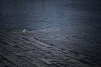 Seagull  by Victor Santos