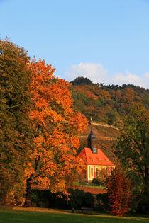 Herbst im Weinberg von Wolfgang Dufner