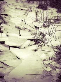 Ried im Eis by dresdner