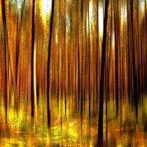 Abstraktion Wald von Matthias Rehme
