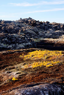 Icelandic Life v.3 von Duvessa Edana