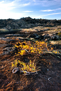 Icelandic Life v.1 von Duvessa Edana