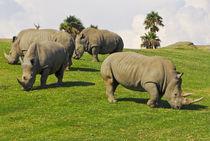 Rhinos in San Diego Wild Park von Brian  Leng