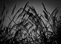 Grassw-1-von-1