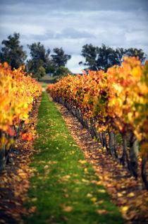 Autumn Vines by Marcus Adams