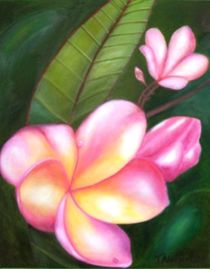Frangipani by Therese Alcorn