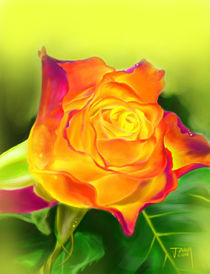 Yellow Rose by jann-galino
