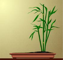 Bamboo-in-a-bonsai-pot