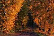 Im Leuchten der Bäume by Wolfgang Dufner