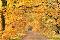 Herbstzeitlose von Jana Behr