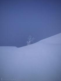 Lonely von Federico Ianeselli