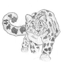 Edit-snow-leopard-by-caitiedidd-d3k3wwg