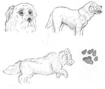 Dog Sketches by Caitlin Wells
