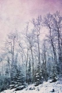winter forest/winterwald by Priska  Wettstein