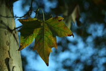 Leaf | Hoja von lain de macias