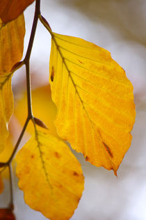 Farben des Herbst by AD DESIGN Photo + PhotoArt