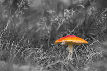 Red Mushroom von 56degreesphotography