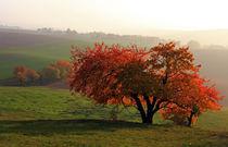 Herbstzauber von Wolfgang Dufner