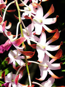 Orchid 1 by Whidden Flores