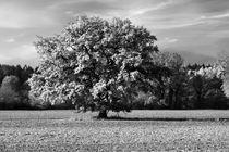 Herbstspaziergang-grafrat