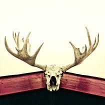 moose trophy/Elch Trophäe von Priska  Wettstein
