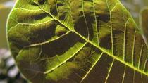 Leaf I by Tamás Varga
